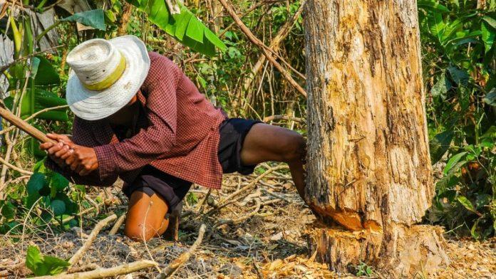 Ανέκδοτο-Πάει ένας χωριάτης ξυλοκόπος στην πόλη να αγοράσει....