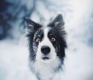 BfWI8UuA5JD png  880 300x257 - Kristýna Kvapilová. Από τις καλύτερες φωτογραφίες σκυλιών που έχω πάρει ποτέ
