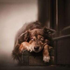 BlxFADQBEK4 png  880 1 300x300 - Kristýna Kvapilová. Από τις καλύτερες φωτογραφίες σκυλιών που έχω πάρει ποτέ