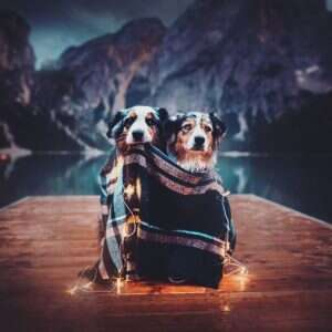 BoOGyomhDuy png  880 1 300x300 - Kristýna Kvapilová. Από τις καλύτερες φωτογραφίες σκυλιών που έχω πάρει ποτέ