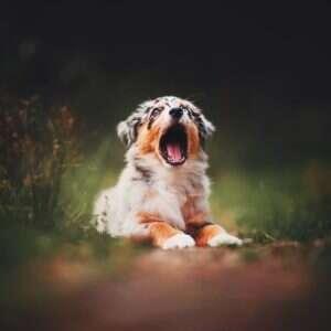 BpWUpPJhZnV 2 png  880 1 300x300 - Kristýna Kvapilová. Από τις καλύτερες φωτογραφίες σκυλιών που έχω πάρει ποτέ