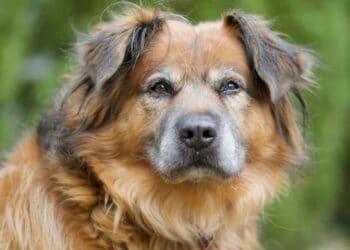 Ανέκδοτο: Ο σκύλος που κέρδισε τον διαγωνισμό εξυπνάδας! Πολύ γέλιο